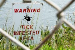http://www.pediatricsnow.com/2012/06/bug-of-the-month-lyme-disease/