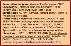 Borrelia Description espèce